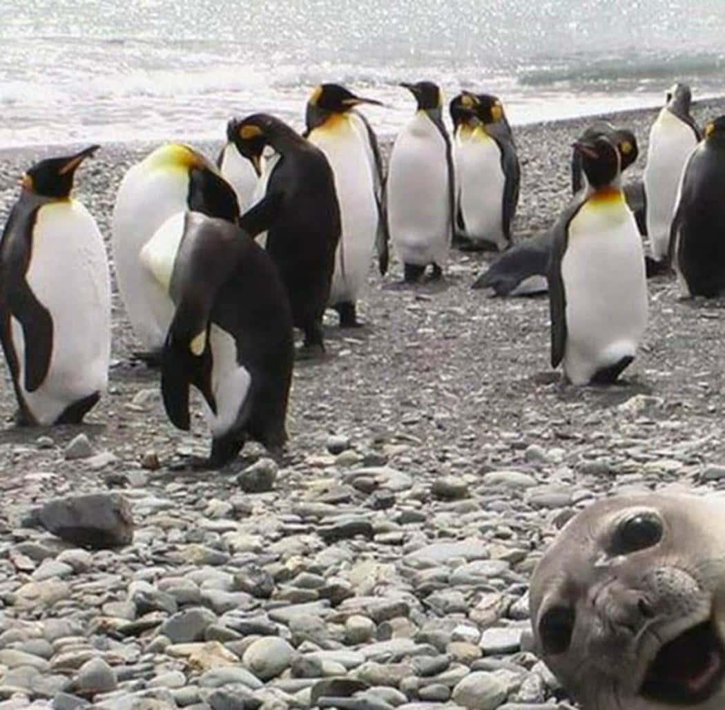 Seal Yah